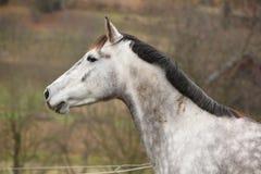 Beautiful white horse on pasturage Royalty Free Stock Photo