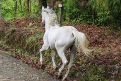 White horse running stock photos