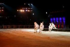Beautiful white horses Stock Photo
