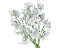 Beautiful White Hyacinth Bouquet Royalty Free Stock Photos