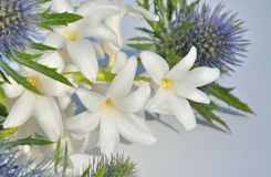 Beautiful white hyacinth Royalty Free Stock Image