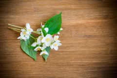 Beautiful white jasmine flowers on a branch on table. Beautiful white jasmine flowers on a branch on a wooden table royalty free stock photo