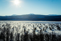 A beautiful white landscape of a frozen swamp with some trees and mountains. In the distance Stock Photography