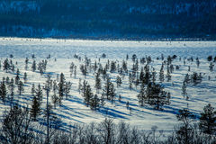 A beautiful white landscape of a frozen swamp with some trees and mountains. In the distance Stock Image
