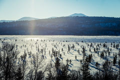 A beautiful white landscape of a frozen swamp with some trees and mountains. In the distance Royalty Free Stock Photography