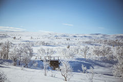 A beautiful white landscape of a snowy winter day with a small wooden foot bridge Stock Photography