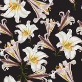 Beautiful white lilies flowers in watercolor style. vector illustration