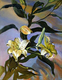 Beautiful White lily. Beautiful Original Oil Painting On Canvas White lily on blue background Royalty Free Stock Photos