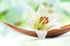 Beautiful white lily flower on a coco palm leaf Royalty Free Stock Images