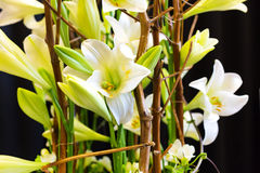Beautiful white lily flower decoration macro close up Stock Images