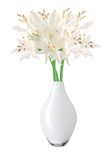 Beautiful white lily flowers in vase isolated on white Stock Image