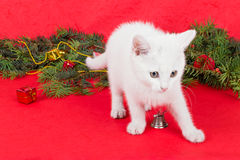 Beautiful white little cat next to Christmas decoration Royalty Free Stock Photography