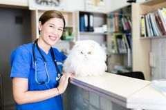 Veterinary woman with cat royalty free stock image