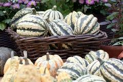 Beautiful white and orange pumpkin. Prepared for storage royalty free stock photos