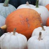 Beautiful white and orange pumpkin. Prepared for storage stock photography