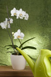 Beautiful white orchid Royalty Free Stock Images