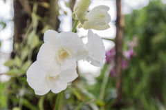 Beautiful white orchid. At home garden Stock Photos