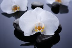 Beautiful white orchid with stones. On dark background Royalty Free Stock Photos