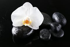 Beautiful white orchid with stones. On dark background Stock Photo