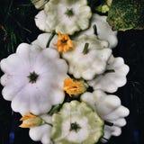 Organic pattypan squashes, closeup royalty free stock image