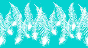 Beautiful white peacock feathers on blue background. Royalty Free Stock Images