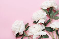 Beautiful white peony flowers bouquet on pink pastel table top view and flat lay style. Stock Images