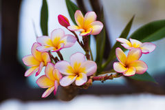 Beautiful white pink color flowers Stock Photo