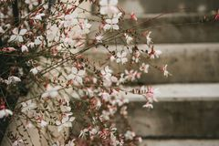 Beautiful white pink flowers in autumn on a city street next to the stairs royalty free stock images