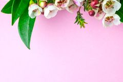 Beautiful white-pink flowers and ornamental plants on a pink background . royalty free stock photo