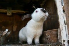 Beautiful white rabbit Stock Photo