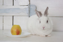 Beautiful white rabbit sitting near a plate with a fresh apple. Royalty Free Stock Photos
