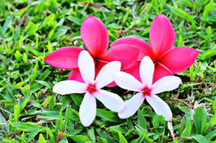 Beautiful white and red flower arrangement. On grass Stock Image