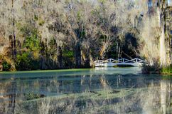 Beautiful white romantic pedestrian bridge over a swamp pond with spanish moss canopy in the Magnolia Plantation Gardens stock photos