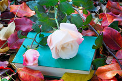Beautiful white rose and the book among the yellow autumn leaves Royalty Free Stock Image
