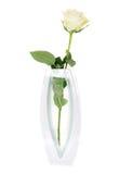 Beautiful White Rose  in vase Royalty Free Stock Photos