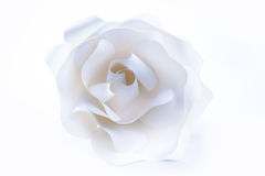 Beautiful white rose on white background. Stock Photo