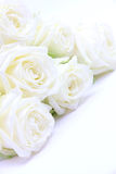 Beautiful white roses Royalty Free Stock Photography