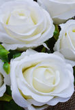Beautiful white roses background Royalty Free Stock Image