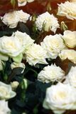 Beautiful white roses. The flowers in the garden. Wallpaper Royalty Free Stock Photography