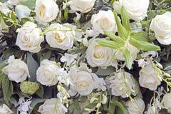 Beautiful white roses royalty free stock image