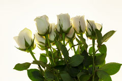 Beautiful white roses in the bouquet, background for wedding cards, greeting card for birthday. Stock Images
