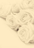 Beautiful white roses. Soft focus. In Sepia toned. Retro style Royalty Free Stock Image