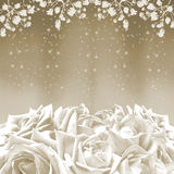 Beautiful white roses Stock Photography