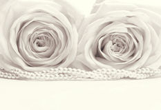 Beautiful white roses toned in sepia as wedding background. Stock Photo