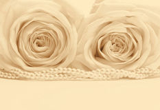 Beautiful white roses toned in sepia as wedding background.  Stock Image