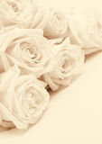 Beautiful white roses toned in sepia as wedding background. Sof Royalty Free Stock Image