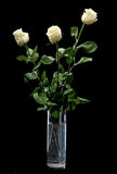 Beautiful white roses in vase Royalty Free Stock Photos