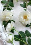 Beautiful white roses ,vintage frames and background of velvet Stock Photography