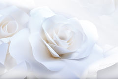 Beautiful white roses on white background. Royalty Free Stock Image