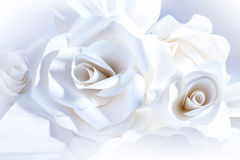 Beautiful white roses on white background. Royalty Free Stock Photo